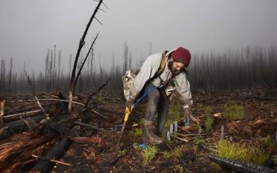 The Tree Planters—Matthew Muzzatti (2016)